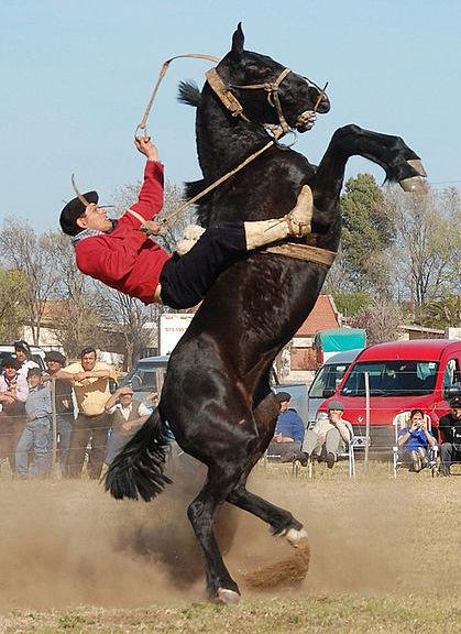 Rearing horse.